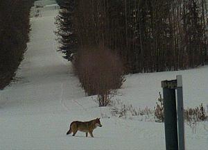 Zima w Puszczy Białowieskiej zdjęcie SG