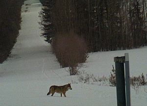 Zima w Puszczy Białowieskiej Zdjęcie Straży Granicznej