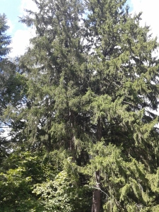 Ile to drzewo może mieć lat? Wieki...