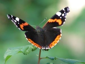 Motyl to ma frajdę, leci gdzie chce, my kierowcy aut musimy mieć drogi